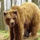 Охота на медведя в Бологое