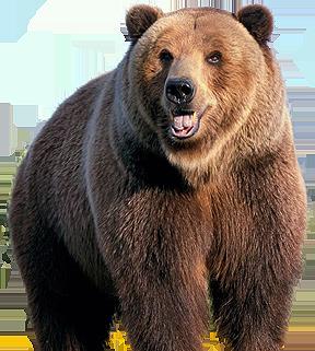 Охота на медведя в Бологовском районе